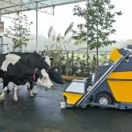 Koeientuin in beslissende fase